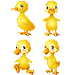 funny duck collection set vector image