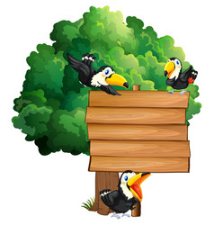 wooden sign with three toucan birds vector image
