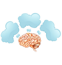 human brain and three speech bubbles vector image vector image