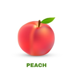 Peach isolated on white background vector image vector image