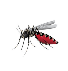 Aedes mosquito vector
