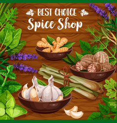 Culinary spice herbs cooking herbal seasonings vector