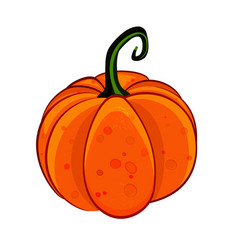 isolated o white pumpkin icon vector image