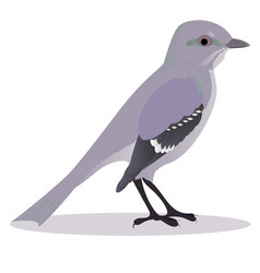 Mockingbird vector