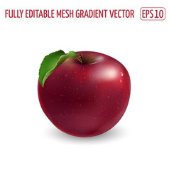 Red apple with a leaf on white background vector