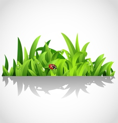Green lush grass with dew and ladybird vector image