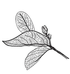 Leaves contours on a white background vector image vector image