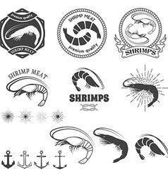 shrimps meat Shrimps in vector image