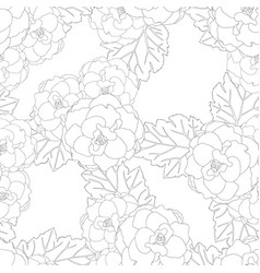 begonia flower picotee outline white background vector image