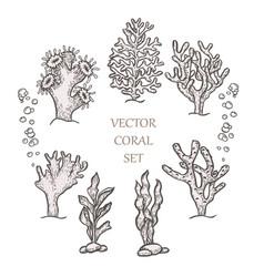 Hand drawn aquatic coral doodle vector