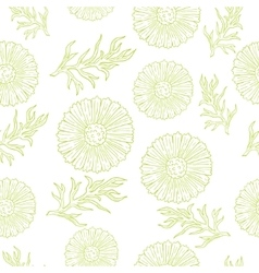 Pattern with camomile and leaves hand drawing vector