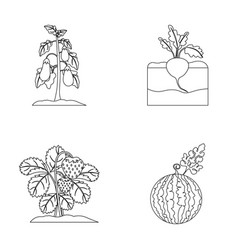 Radish strawberry watermelon eggplantplant set vector