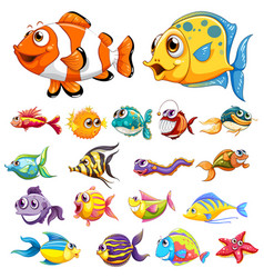 different types of fish vector image