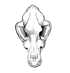 Dog skull engraving style vector