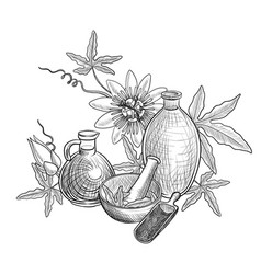 drawing passion fruit oil vector image