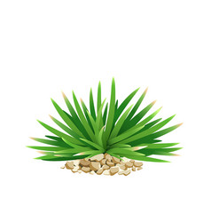 Mini mondo grass with small stone vector