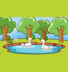 Scene with ducks in pond vector