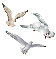 seagull vector image
