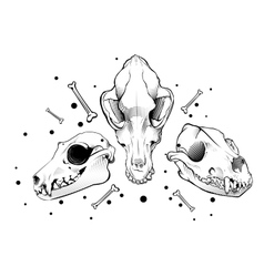 dog skull engraving style vector image