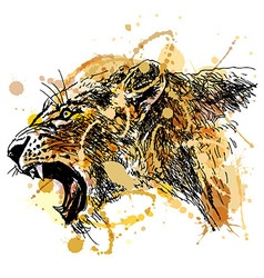 Colored hand sketch roaring lioness head vector image