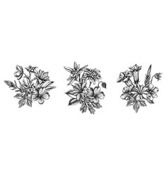 Flower bouquet black and white edelweiss vector
