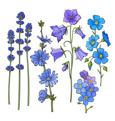 Hand drawn blue flowers - lavender forget me not vector