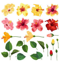 Hibiscus floral set flowers leaves and branches vector