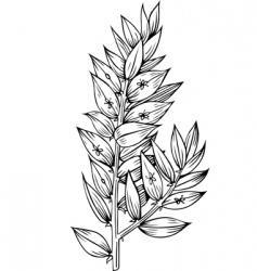 plant phyllon klados vector image