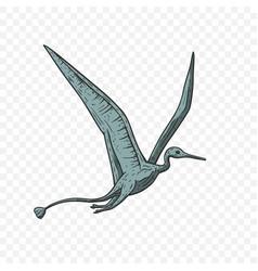 pteranodon dinosaur vector image