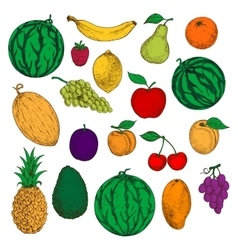 Fresh and ripe fruits colored sketches vector image vector image