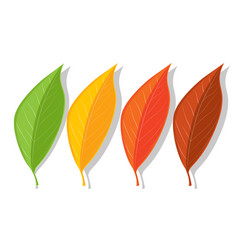 Set four summer and autumn leaves green vector