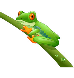 cartoon red-eyed amazon on branch vector image