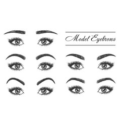 Female eyebrows eyes and lashes makeup styles vector
