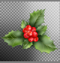 Holly berry leaves christmas decoration eps 10 vector