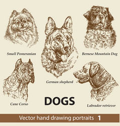 Set hand drawing dogs 1 vector