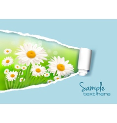daisy and ripped paper vector image vector image