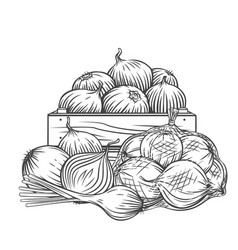 Onion leek outline hand drawn monochrome engraved vector