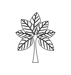 Silhouette tree with leaves and trunk vector