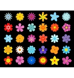 top view colorful blooming flowers vector image