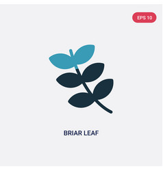 two color briar leaf icon from nature concept vector image