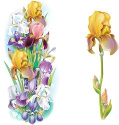 garlands iris flowers vector image