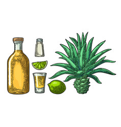 Glass and botlle of tequila cactus salt lime vector