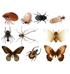 set of bug and insect vector image
