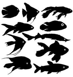 black set silhouette of aquarium fish on white vector image