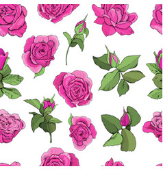 flowers seamless pattern isolated on white vector image