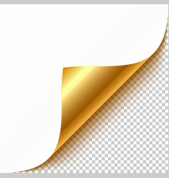 Gold curled corner with reflection and shadow vector