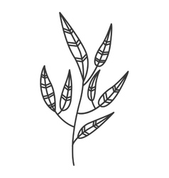 Gray scale branch with leaves contour vector