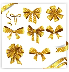 Set of gold polka dot gift bows with ribbons vector