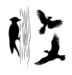silhouettes a woodpecker vector image