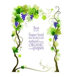 Background with grape vector image